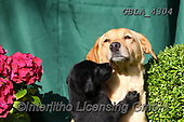 Bob, ANIMALS, REALISTISCHE TIERE, ANIMALES REALISTICOS, dogs, photos+++++,GBLA4304,#a#, EVERYDAY