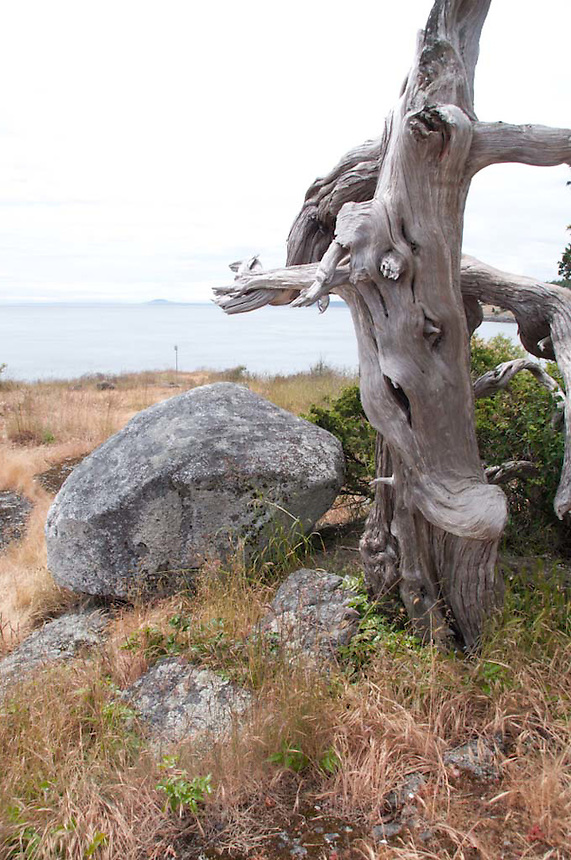 Gnarled Tree and Rocks, Gossip Island, San Juan Islands, Washington, US