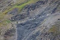 Kenai Fjords National Park, Kenai Peninsula, southcentral, Alaska.