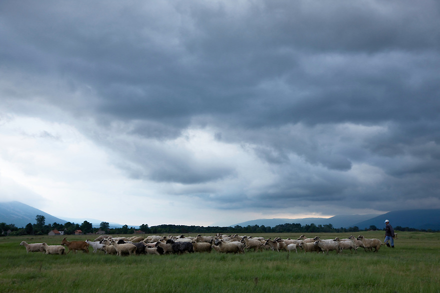 Sheep herd in the Nuglasica area (and shepherd/s) and a dramatic sky during the late afternoon. Few people living in the middle-northern side of the vst plain. Livansko Polje -  karst plateau: arguably the largest karst field in the world. This is an area that was affected by Balkan war (1991-1995) Livansko. May 2009. <br /> Bosnia-Herzegovina. <br /> Model release form not available: I was alone and the local people speaking local language only.<br /> Elio della Ferrera / Wild Wonders of Europe