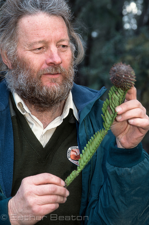 "Dr Wyn Jones, botantist for National Parks and Wildlife Service of New South Wales, holding branch of new species ""Wollemi Pine"""