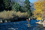 Woman fly fishing amidst fall color in the Big Thompson River, Rocky Mtns, CO
