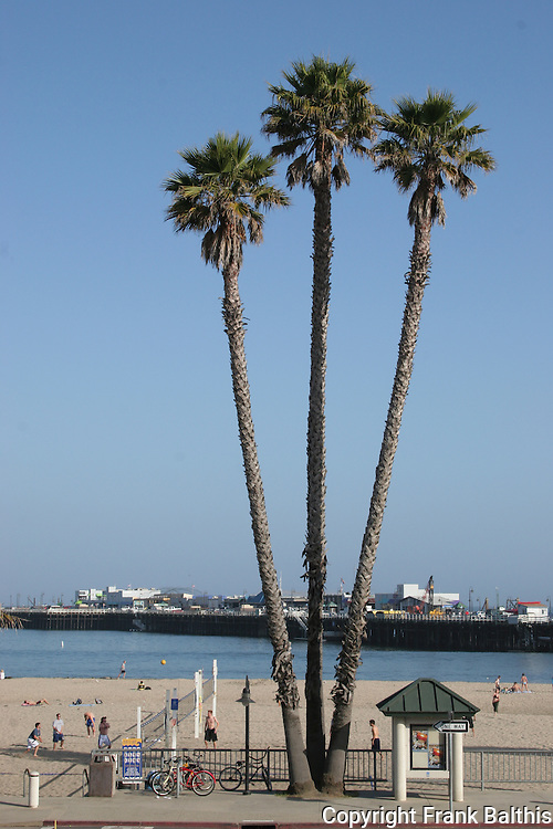 Palm trees and Muni Wharf