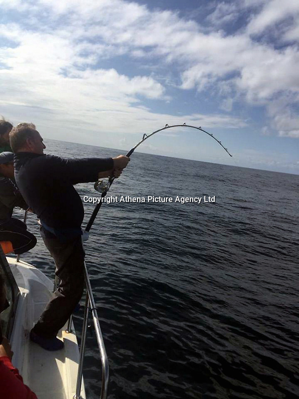 "Pictured: Andrew Alsop pulling his fishing rod with the giant tuna he caught off the Pembrokeshre coast, Wales, UK.<br /> Re: What is thought to be one of the biggest fish ever landed from the sea in Wales was caught in Pembrokeshire waters.<br /> A magnificent blue fin tuna, weighing in at 504 pounds and measuring seven feet seven inches was brought on board the White Water charter craft, operating out of Neyland, while on a shark fishing expedition in the Celtic Deep, 45 miles out to sea.<br /> Skipper Andrew Alsop fought the powerful giant for two hours and 15 minutes as the tuna towed the boat for two-and-half miles.<br /> Describing it as ""the fish of a lifetime"", Andrew, aged 48, said: ""We've had Welsh shark fishing records off the boat, but this was actually the first time, in 20 years, that I was both the skipper and the angler.""<br /> Saundersfoot commercial fisherman Gavin Davies had chartered the boat for a day's shark fishing trip with his crew members Tom Watkins, Chris Watkins and Andrew Jones and friends Arno Tiesing and Dorian Thomas.<br /> When it was suspected that the tuna could be on the end of a line, Andrew passed over the controls of the boat to Gavin and took the rod for the battle of his life.<br /> ""I really didn't think we had any chance in a million years of holding it on the tackle,"" he admitted. ""But it really was a day that was meant to be as I was able to let Gavin take over the controls.<br /> ""At one stage I thought 'I can't do this' - the fish was pinwheeling and fighting. But I had to land it, or it would just have been another fisherman's tale.<br /> ""I knew it would be big, but when it eventually came up it was even more massive than I thought. It took six of us to get it on board. We made sure we had plenty of photos then put him back in the water - he was pretty tired but hopefully he would be ok.<br /> ""It was an absolutely mad day, to be honest, and I'm aching all over this morning!""<br /> Added Gavin: ""I'd gone with the boys for a day out shark fishing, but we never expected this. I've ne"