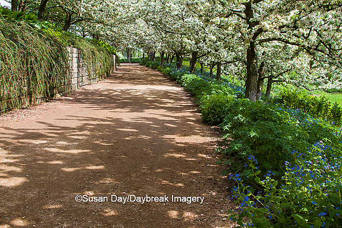 63821-22517 Walkway in spring at Chicago Botanic Garden, Glencoe., IL