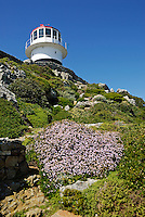 Path leading to the historic lighthouse at Cape Point, Cape of Good Hope, Western Cape Province, South Africa
