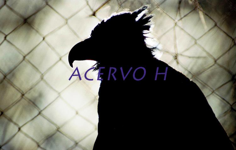 O Gavi&atilde;o-real &eacute; uma ave accipitriforme da fam&iacute;lia Accipitridae. &Eacute; conhecido tamb&eacute;m como Gavi&atilde;o-de-penacho, Guira&ccedil;u (uir&aacute;, guir&aacute; = ave, a&ccedil;u = grande), H&aacute;rpia e Uira&ccedil;u.<br /> Embora n&atilde;o seja a maior das aves predadoras do planeta, &eacute; tida como a mais forte. Possui bico potente e suas guarras s&atilde;o maiores que as do urso pardo americano, suas pernas tem a grossura de um punho de um homem adulto.<br /> Tem um crescimento populacional muito lento. Este fato, associado &agrave; destrui&ccedil;&atilde;o de grandes &aacute;reas florestais e &agrave; ca&ccedil;a indiscriminada, torna a esp&eacute;cie amea&ccedil;ada de extin&ccedil;&atilde;o em nosso Pa&iacute;s. <br /> <br /> Caraj&aacute;s, Par&aacute;, Brasil<br /> Foto Paulo Santos