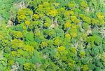 Vista a&eacute;rea da Floresta Amaz&ocirc;nica com &aacute;rvores floridas | Aerial view of the Amazon Rainforest with flowering trees<br /> <br /> LOCAL: Quer&ecirc;ncia, Mato Grosso, Brasil <br /> DATE: 07/2009 <br /> &copy;Pal&ecirc; Zuppani