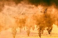 Driftwood in morning fog<br /> Schreiber<br /> Ontario<br /> Canada