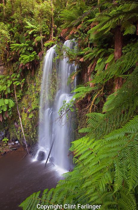 Beauchamp Falls, Otway Forest Park, Victoria, Australia