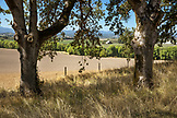 USA, Oregon, Willamette Valley, view of the Willamette Valley from the road that leads up to Soter Vineyards, Carlton