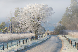 Frost and a light snow in early morning light, Cades Cove, Great Smoky Mountains. <br />