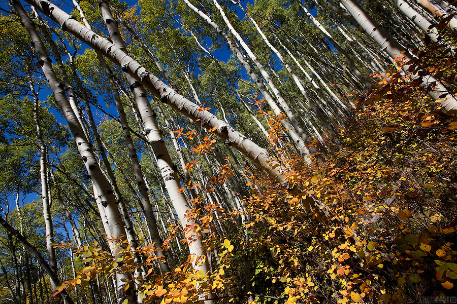 Layers of color alight along the Deluge Creek Trail in the Eagles Nest Wilderness Area near Vail, Colorado.