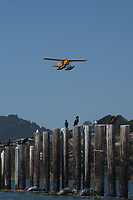Sea Plane, Sausalito, California, US