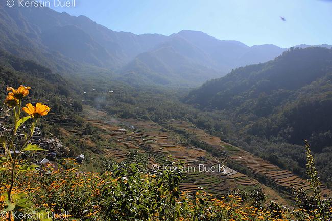 Rice fields in Khonoma village, Nagaland