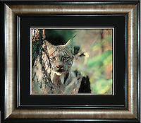Image Size:  16&quot; x 20&quot;<br />