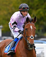 Moabit ridden by Megan Nicholls goes down to the start of Winner of The Byerley Stud 'Season Finale' Handicap   during Bathwick Tyres Reduced Admission Race Day at Salisbury Racecourse on 9th October 2017
