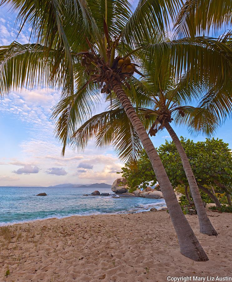 Virgin Gorda, British Virgin Islands, Caribbean <br /> Palm trees shelter a quiet beach on Spring Bay at sunset, Spring Bay National Park
