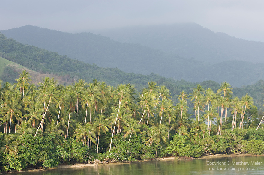 Milne Bay, Papua New Guinea; palm trees and tropical rainforest, viewed from Tawali Resort , Copyright © Matthew Meier, matthewmeierphoto.com