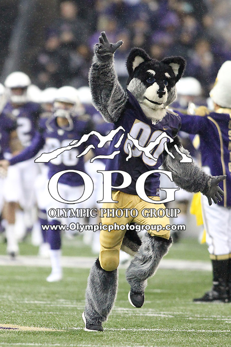 Nov 7:  Washington Mascot Harry against Utah.  Utah defeated Washington 34-23 at Husky Stadium in Seattle, WA.
