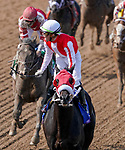 November 2, 2019 : Spun to Run, ridden by Irad Ortiz Jr., wins the Big Ass Fans Breeders' Cup Dirt Mile on Breeders' Cup Championship Saturday at Santa Anita Park in Arcadia, California on November 2, 2019. Chris Crestik/Eclipse Sportswire/Breeders' Cup/CSM