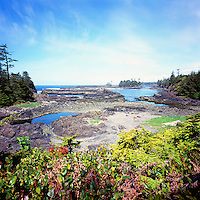 Rugged Coastline along the Pacific West Coast of Vancouver Island, near Ucluelet, BC, British Columbia, Canada