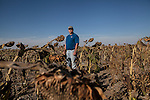 Mitchell Baalman stands for a portrait in a field of sunflowers on his family's 12,000-acre farm outside of Hoxie, Kan., on Thursday, Oct. 11, 2012. As historically dry conditions continue, farmers from South Dakota to the Texas panhandle rely on the Ogallala Aquifer, the largest underground aquifer in the United States, to irrigate crops. After decades of use, the falling water level ? accelerated by historic drought conditions over the last two years ? is putting pressure on farmers to ease usage or risk becoming the last generation to grow crops on the land. Farmers like Mitchell Baalman and Brett Oelke (not pictured), are part of a farming community in in Sheridan County, Kansas, an agricultural hub in western Kansas, who have agreed to cut back on water use for crop irrigation so that their children and future generations can continue to farm and sustain themselves on the High Plains.