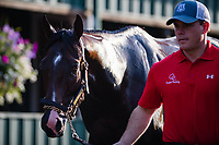 BALTIMORE, MD - MAY 18: Assistant Trainer Norman Casse holds Classic Empire as he receives a bath after training in preparation for the Preakness Stakes at Pimlico Race Course on May 18, 2017 in Baltimore, Maryland.(Photo by Douglas DeFelice/Eclipse Sportswire/Getty Images)