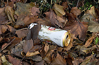 Beer can littered among autumn leaves, Oxfordshire, United Kingdom