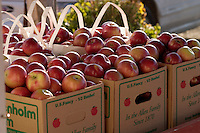 Apples at Allenholm Orchards in South Hero, VT.