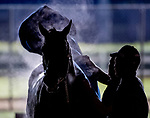 LOUISVILLE, KENTUCKY - APRIL 29: A horses gets a bath after exercising at Churchill Downs in Louisville, Kentucky on April 29, 2019. Scott Serio/Eclipse Sportswire/CSM