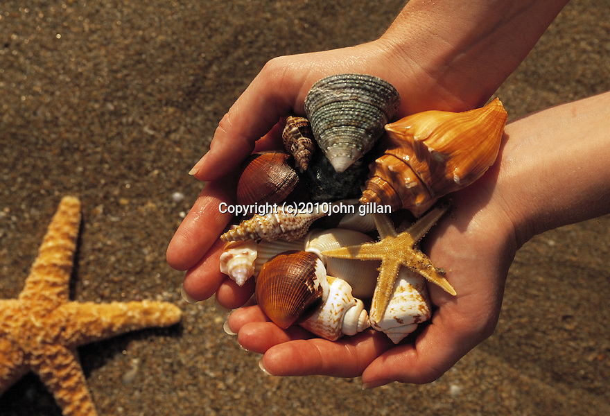 Person holding a collection of shells on the beach with a starfish in the sand.