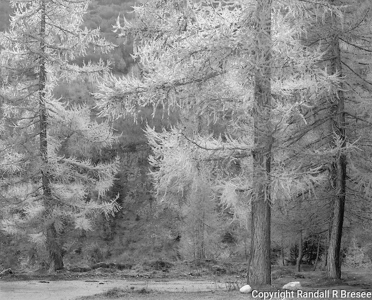 &quot;Trees By A Roadside Pullout&quot; Bedretto, Switzerland<br />