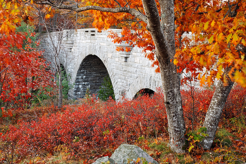 Carriage road bridge framed by autumn foliage, Mount Desert Island, Acadia National Park, near Bar Harbor, Maine, USA