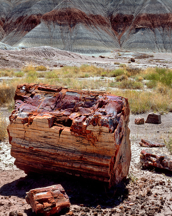 Morning light on a petrified log in The Teepees; Petrified Forest National Park, AZ