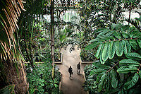 Various plant species in the Palm House at the Royal Botanical Gardens, Kew in London.