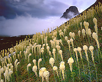 Clearing storm over a field of Beargrass below Logan Pass; Glacier National Park, MT