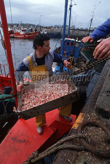 Europe/France/Bretagne/29/Finistère/Loctudy: retour de pêche [Non destiné à un usage publicitaire - Not intended for an advertising use]