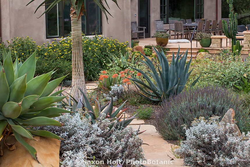 Stepping stone path through drought tolerant summer-dry garden with succulents, Santa Barbara California