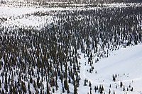 Musher passes through the boreal forest during the 2008 All Alaska Sweepstakes sled dog race.