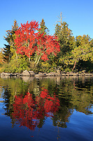 """Brilliant Autumn Blaze""<br />