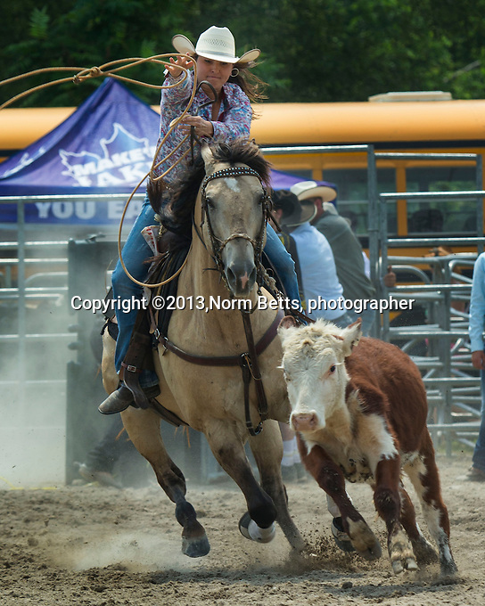 RAM Rodeo Warkworth, Ontario, Canada,   6&amp;7July'13<br /> Norm Betts, photographer<br /> tel:416 460 8743<br /> normbetts@canadianphotographer.com<br /> &copy;2013, normbetts, photographer