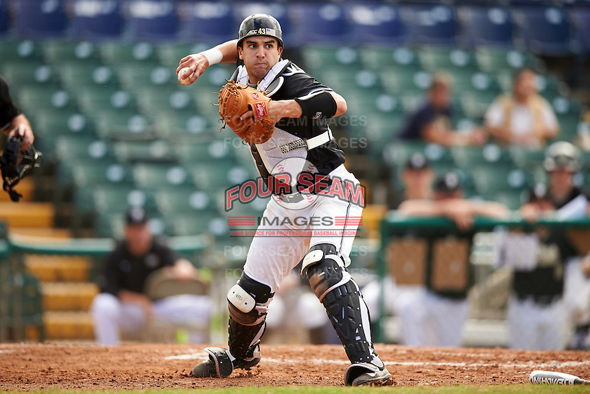 Pittsburgh Panthers catcher Manny Pazos (43) throws to first base during a game against the Siena Saints on February 24, 2017 at Historic Dodgertown in Vero Beach, Florida.  Pittsburgh defeated Siena 8-2.  (Mike Janes/Four Seam Images)