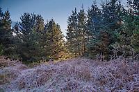 Woodland on Longridge Fell.