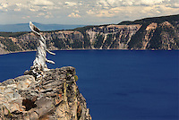Trunk of old dead snag standing on rim of Crater Lake, Crater Lake National Park, Oregon, USA, North America