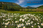 Tom Mackie, LANDSCAPES, LANDSCHAFTEN, PAISAJES, photos,+America, American, Colorado, Crested Butte, Nicholson Lake, North America, Tom Mackie, USA, beautiful, flower, flowers, green+, horizontal, horizontals, lake, landscape, landscapes, nobody, ox-eye daisies, scenery, scenic, wildflower, wildflowers,Amer+ica, American, Colorado, Crested Butte, Nicholson Lake, North America, Tom Mackie, USA, beautiful, flower, flowers, green, ho+rizontal, horizontals, lake, landscape, landscapes, nobody, ox-eye daisies, scenery, scenic, wildflower, wildflowers+,GBTM190212-1,#l#, EVERYDAY