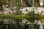 Fisherman fishing in sub-alpine lake, Ansel Adams Wilderness, Sierra Nevada, California