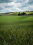 Green rolling hills in the summer in the Palouse Valley