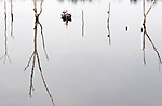 A fisherman steers his boat through a maze of trees and stumps, reflected in Falls Lake.