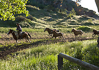 Eaton's Ranch is a 6,000-acre cattle and dude ranch operating  for more than 125 years in Wolf Wyo. Photographed June 14, 2005.